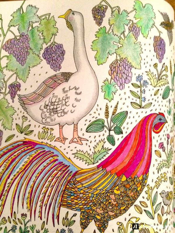 Иллюстрация 19 из 50 для Птицы счастья. Раскрась свой мир и добавь жизни цвета | Лабиринт - книги. Источник: сташевская  гита нонна