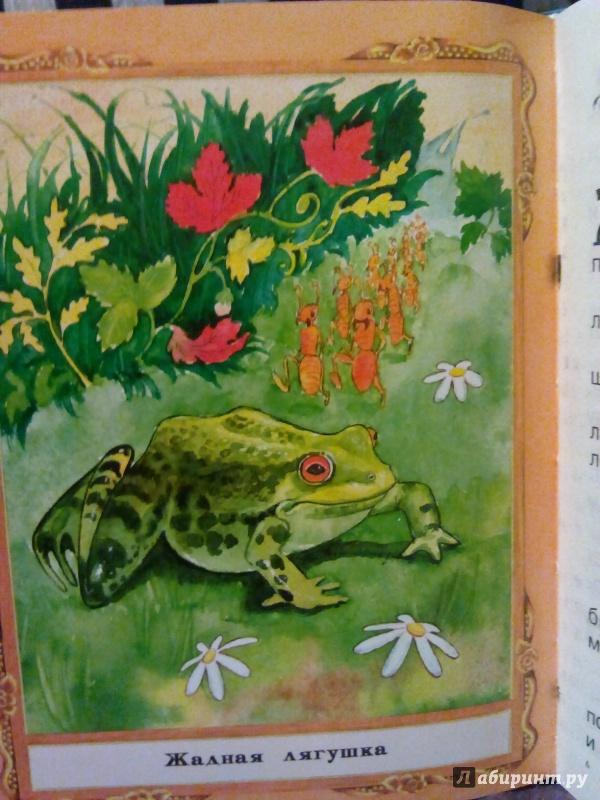 Иллюстрация 1 из 11 для Сказки о животных   Лабиринт - книги. Источник: Анютка