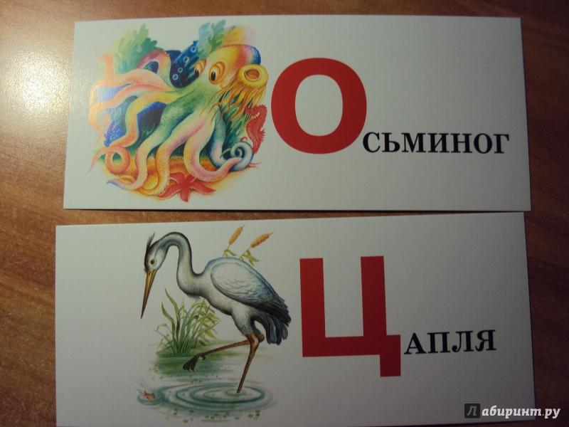 Иллюстрация 1 из 8 для Учим азбуку. Набор карточек | Лабиринт - книги. Источник: mari-nulya
