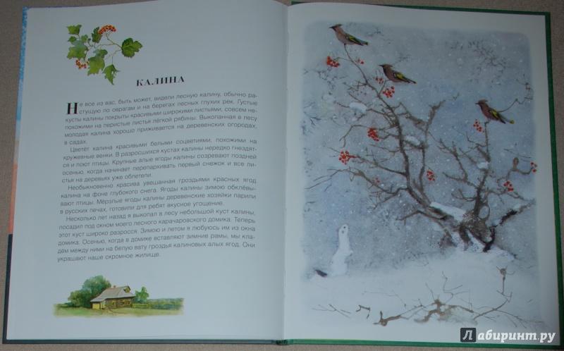 Иллюстрация 25 из 56 для Русский лес - Иван Соколов-Микитов | Лабиринт - книги. Источник: Книжный кот