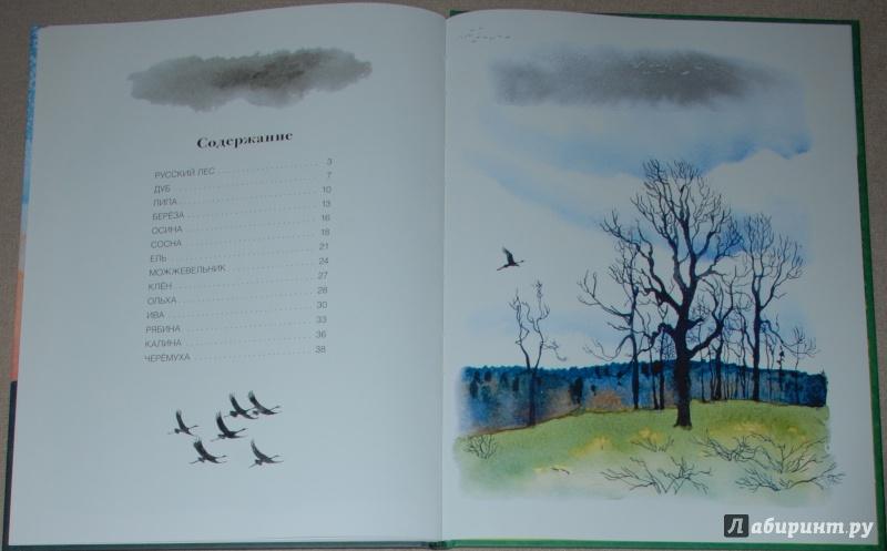 Иллюстрация 27 из 56 для Русский лес - Иван Соколов-Микитов   Лабиринт - книги. Источник: Книжный кот