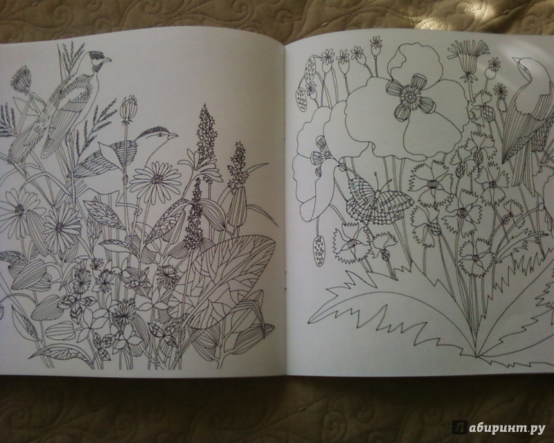 Иллюстрация 25 из 50 для Птицы счастья. Раскрась свой мир и добавь жизни цвета | Лабиринт - книги. Источник: Родионова  Надежда