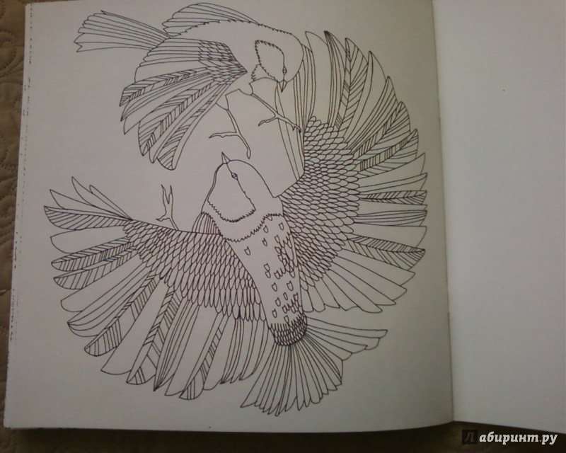 Иллюстрация 27 из 50 для Птицы счастья. Раскрась свой мир и добавь жизни цвета   Лабиринт - книги. Источник: Родионова  Надежда
