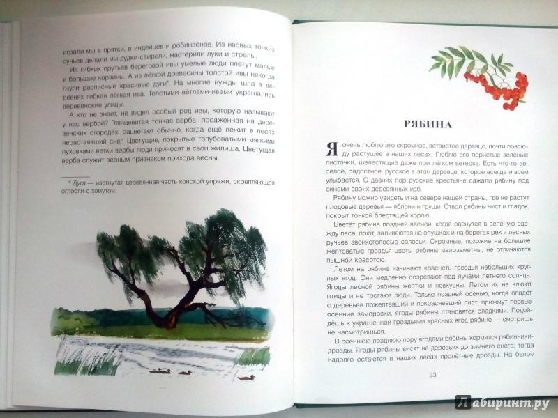 Иллюстрация 38 из 56 для Русский лес - Иван Соколов-Микитов | Лабиринт - книги. Источник: Klementinchen