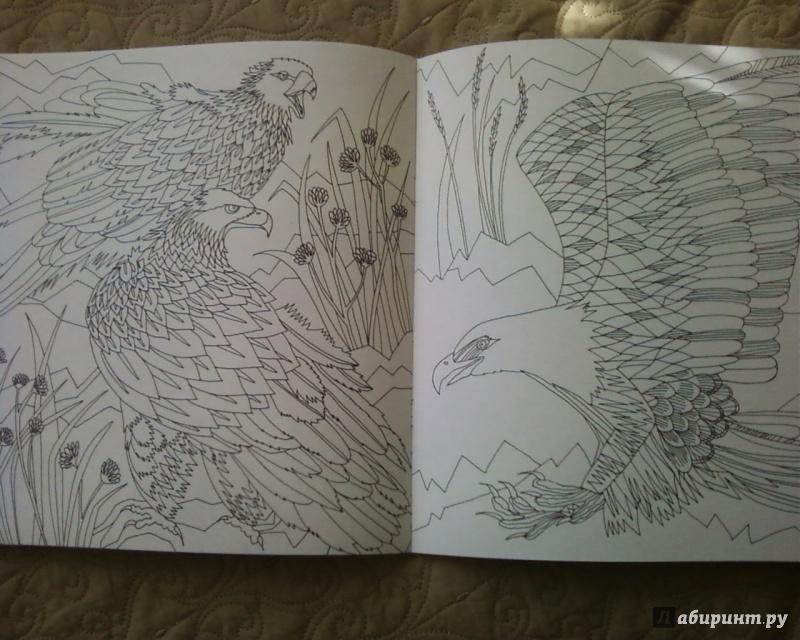 Иллюстрация 28 из 50 для Птицы счастья. Раскрась свой мир и добавь жизни цвета   Лабиринт - книги. Источник: Родионова  Надежда