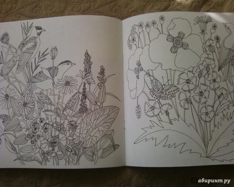 Иллюстрация 31 из 50 для Птицы счастья. Раскрась свой мир и добавь жизни цвета | Лабиринт - книги. Источник: Родионова  Надежда