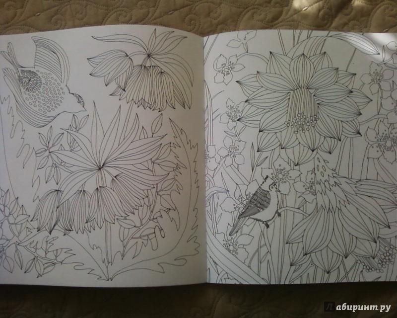Иллюстрация 32 из 50 для Птицы счастья. Раскрась свой мир и добавь жизни цвета | Лабиринт - книги. Источник: Родионова  Надежда