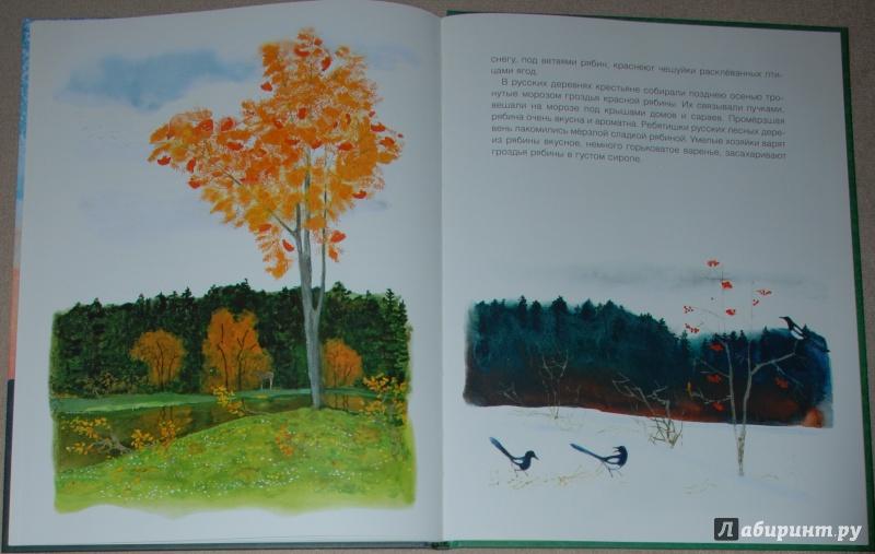 Иллюстрация 24 из 56 для Русский лес - Иван Соколов-Микитов | Лабиринт - книги. Источник: Книжный кот
