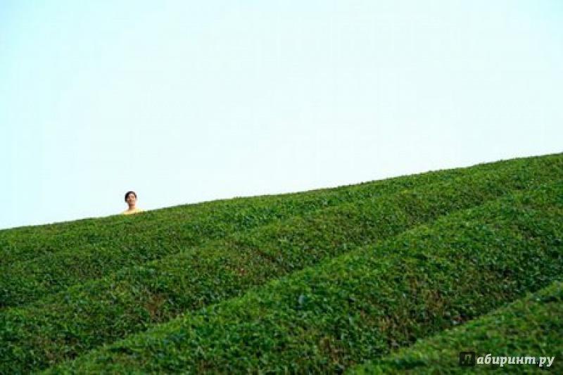 Иллюстрация 1 из 12 для Кино без границ. Траурный лес (DVD) - Наоми Кавасе | Лабиринт - видео. Источник: Бородин  Алексей