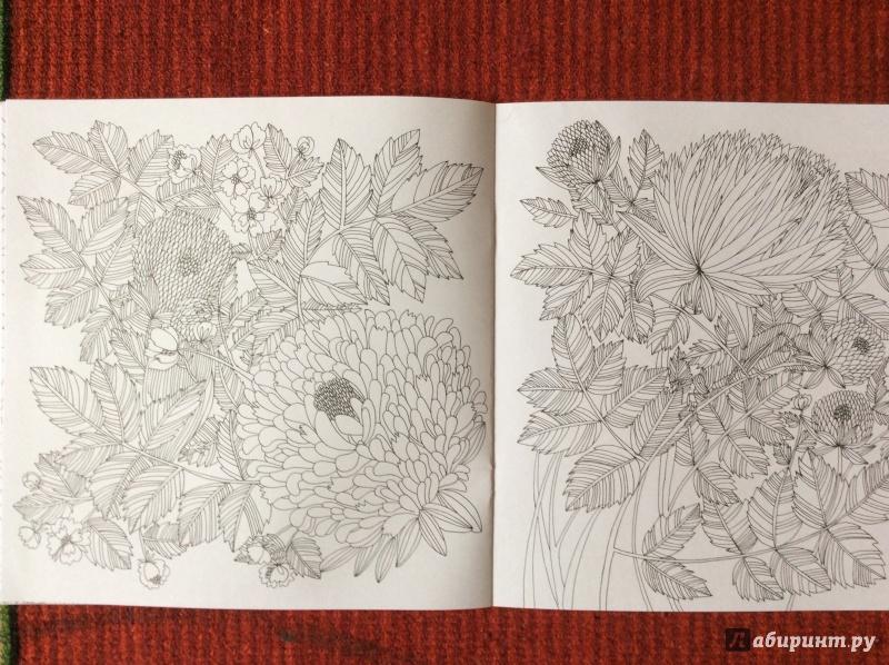 Иллюстрация 14 из 27 для Раскраска. Прятки-загадки ...