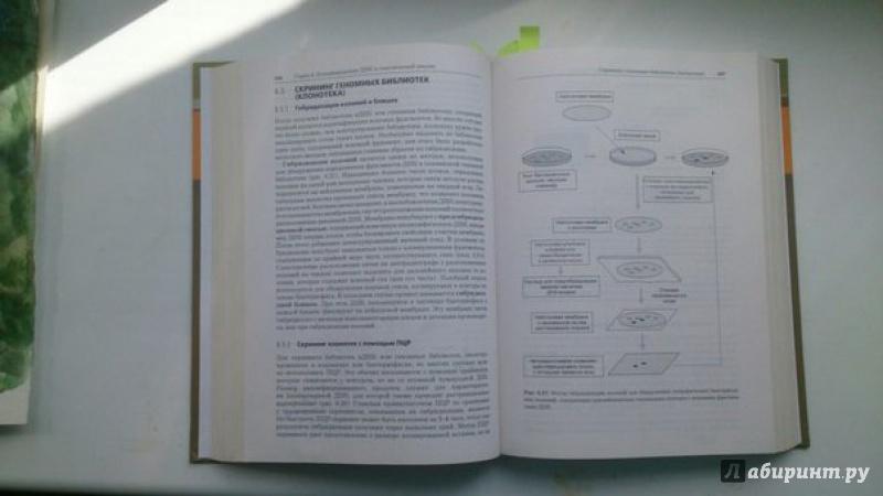 Иллюстрация 1 из 4 для Принципы и методы биохимии и молекулярной биологии - Уилсон, Уолкер | Лабиринт - книги. Источник: Арамова  Оля