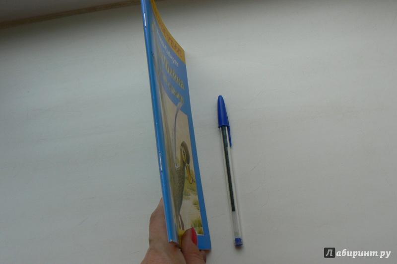 Иллюстрация 1 из 4 для Серая шейка и другие сказки - Дмитрий Мамин-Сибиряк | Лабиринт - книги. Источник: Марина