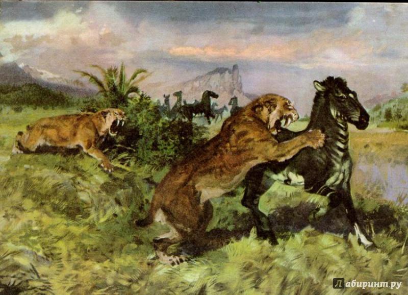 Иллюстрация 65 из 65 для Палеонтология в картинках - Ирина Яковлева | Лабиринт - книги. Источник: Элена