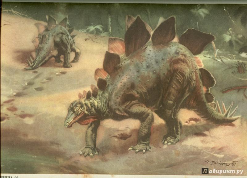 Иллюстрация 52 из 65 для Палеонтология в картинках - Ирина Яковлева | Лабиринт - книги. Источник: Элена