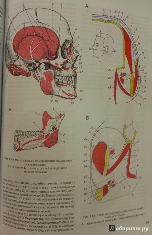 Иллюстрация 5 из 6 для Практикум по анатомии человека. В 4-х частях. Часть 1. Опорно-двигательная система - Цыбулькин, Горская, Колесников | Лабиринт - книги. Источник: Den