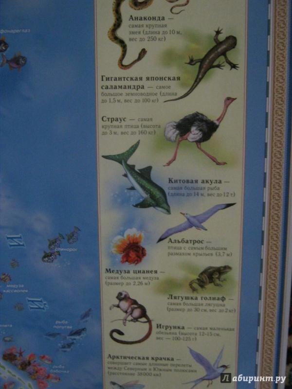 Иллюстрация 12 из 24 для Животный и растительный мир Земли. Детская карта | Лабиринт - книги. Источник: Евгения39