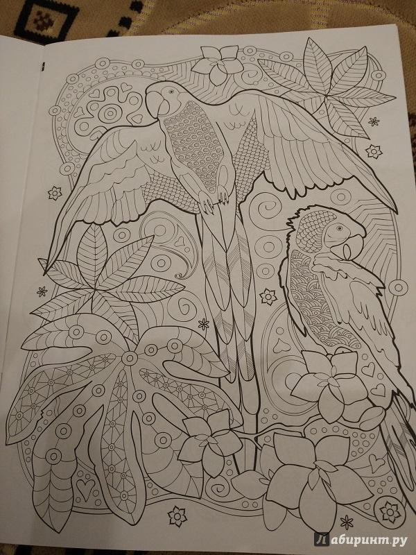 Иллюстрация 3 из 25 для Тропики. Раскраска | Лабиринт - книги. Источник: Melaschka