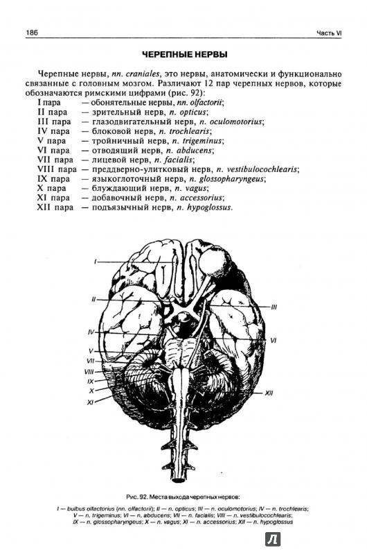 Иллюстрация 6 из 21 для нормальная анатомия человека. Том 1.