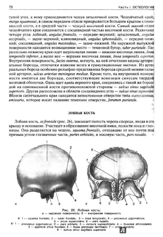Иллюстрация 3 из 21 для нормальная анатомия человека. Том 1.