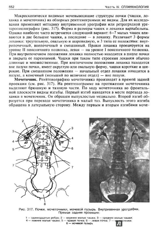 Нормальная анатомия человека. В 2 томах. Том 1 — и. В. Гайворонский.