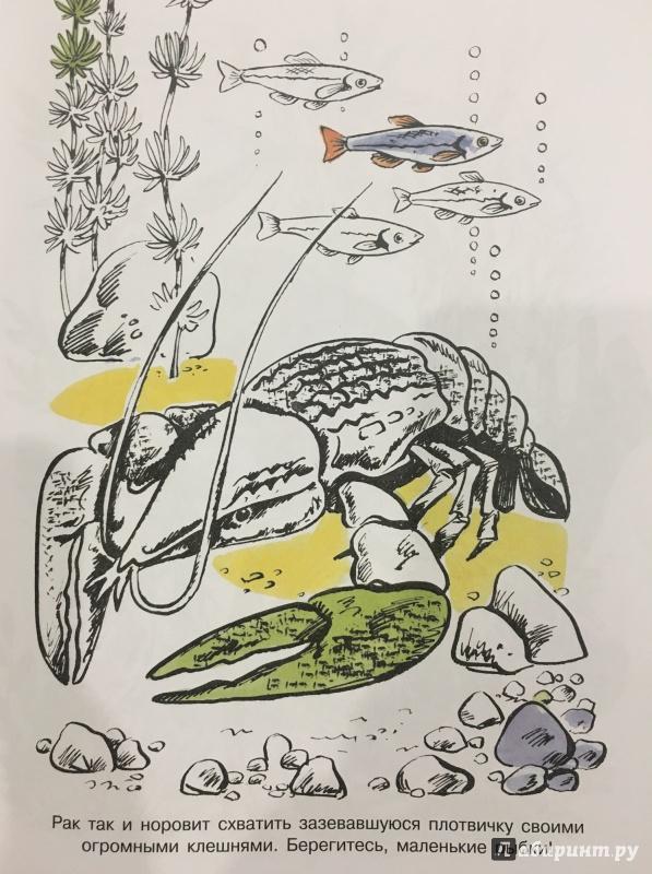 Иллюстрация 2 из 15 для На реке. Альбом для раскрашивания | Лабиринт - книги. Источник: Издательство  СТРЕКОЗА