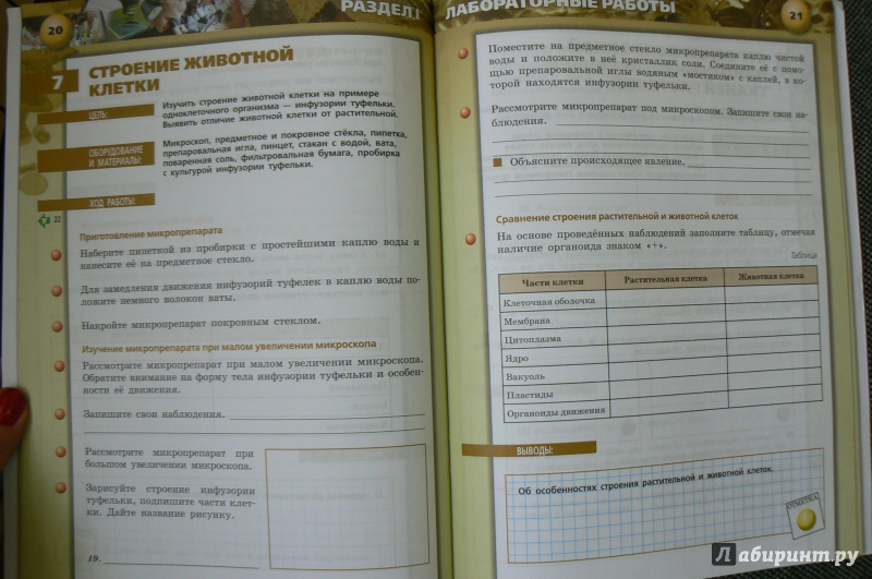 гдз по биологии 8 класс тетрадь практикум сухорукова онлайн