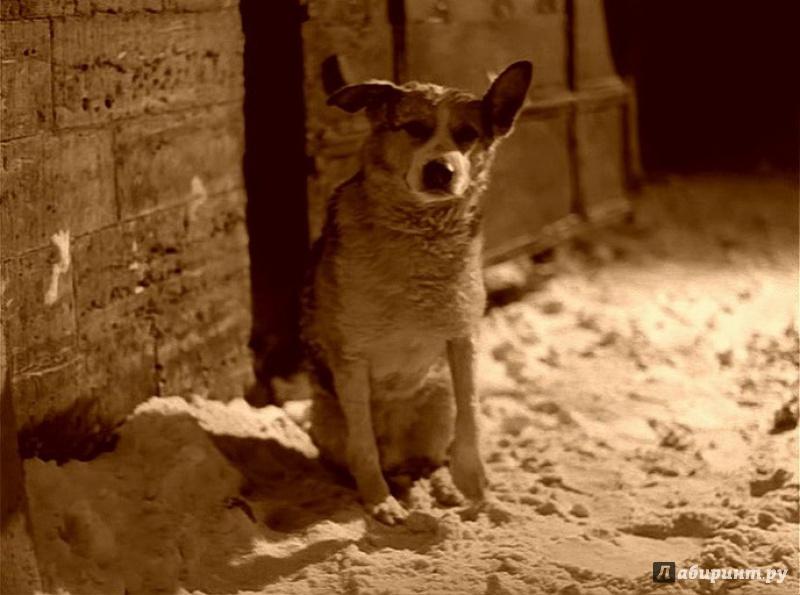 Иллюстрация 1 из 22 для Собачье сердце. Ремастированный (DVD) - Владимир Бортко | Лабиринт - видео. Источник: Миногина  Наталья
