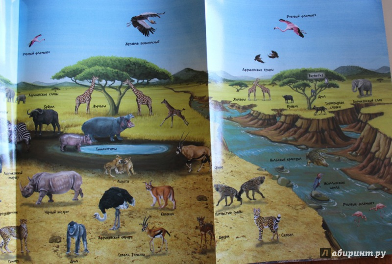 Иллюстрация 19 из 21 для МегаZOOпанорама. Саванна | Лабиринт - книги. Источник: Катерина