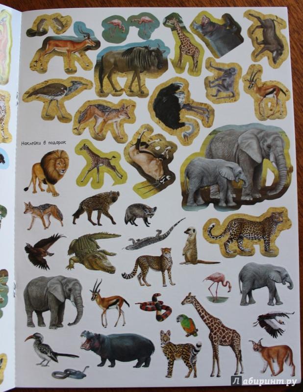 Иллюстрация 14 из 21 для МегаZOOпанорама. Саванна | Лабиринт - книги. Источник: Катерина