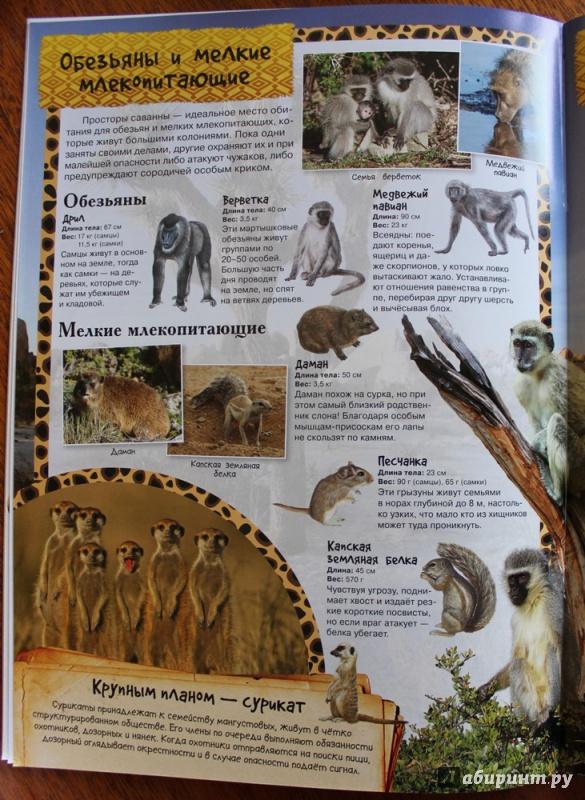 Иллюстрация 16 из 21 для МегаZOOпанорама. Саванна | Лабиринт - книги. Источник: Катерина