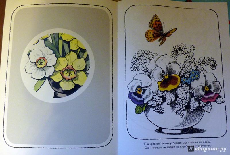 """Книга: """"Цветы из сада. Альбом для раскрашивания"""" - Н ..."""