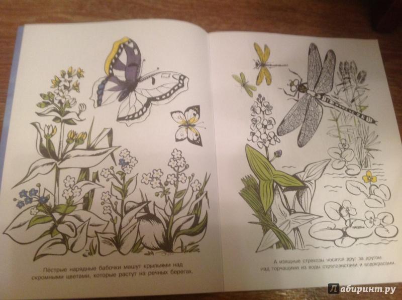 Иллюстрация 7 из 15 для На реке. Альбом для раскрашивания | Лабиринт - книги. Источник: Непутевая мамашка