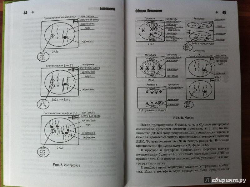 Иллюстрация 1 из 14 для Биология. Авторский курс подготовки к ЕГЭ - Максим Филатов | Лабиринт - книги. Источник: Лабиринт