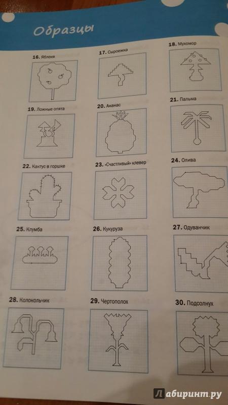 Иллюстрация 20 из 26 для Графические диктанты. Растения и грибы. Тетрадь для занятий с детьми 6-7 лет. ФГОС ДО - Вениамин Мёдов | Лабиринт - книги. Источник: Наталья