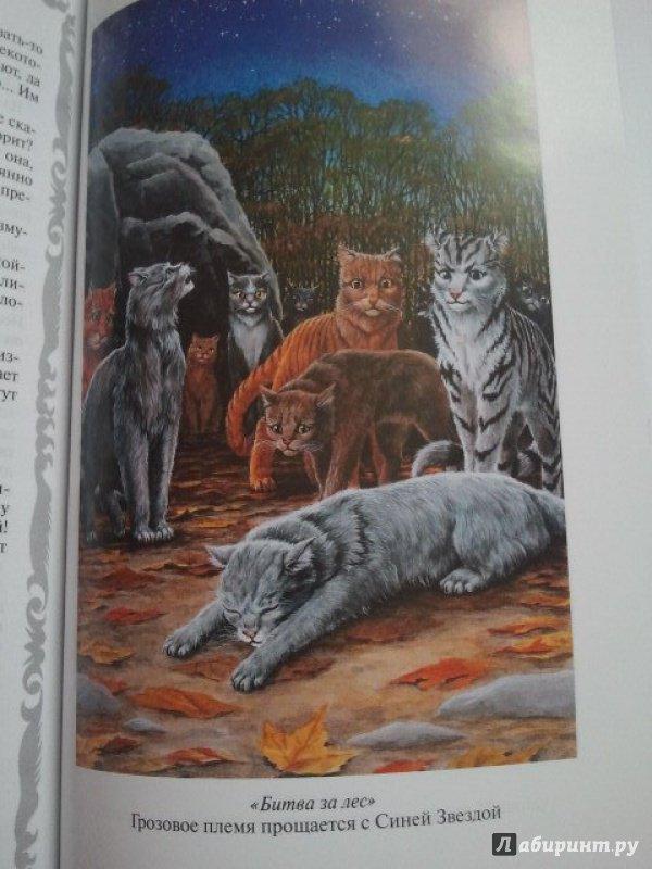 Эрин хантер коты воители битва за лес