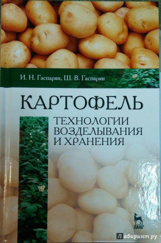 Технология хранения картофеля курсовая