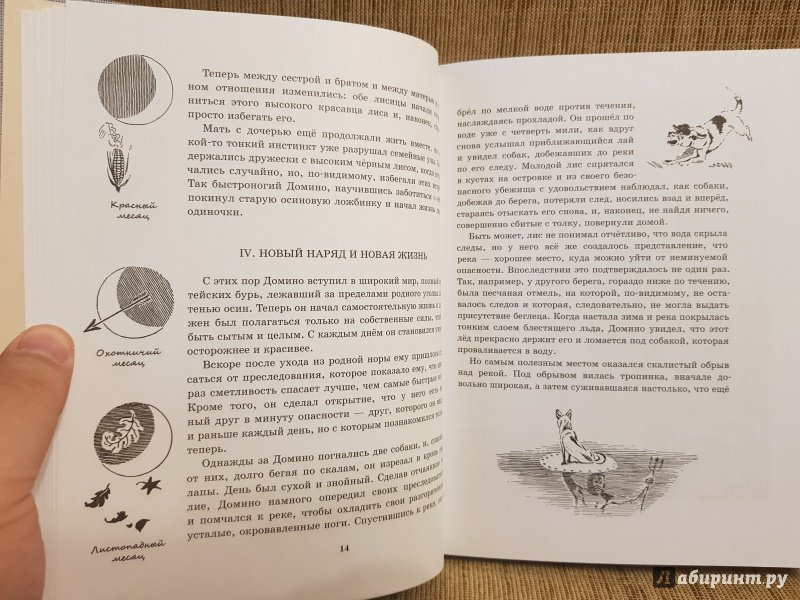 Иллюстрация 17 из 72 для Рассказы о животных. Часть 1 - Эрнест Сетон-Томпсон | Лабиринт - книги. Источник: Алексей Гапеев
