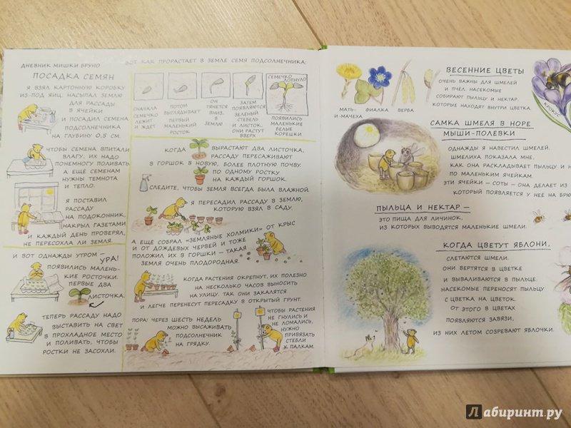 Иллюстрация 44 из 45 для Весна мишки Бруно - Гунилла Ингвес   Лабиринт - книги. Источник: Агеева  Наталья Владимировна