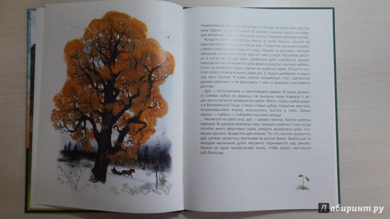 Иллюстрация 50 из 56 для Русский лес - Иван Соколов-Микитов | Лабиринт - книги. Источник: Елена  Е.