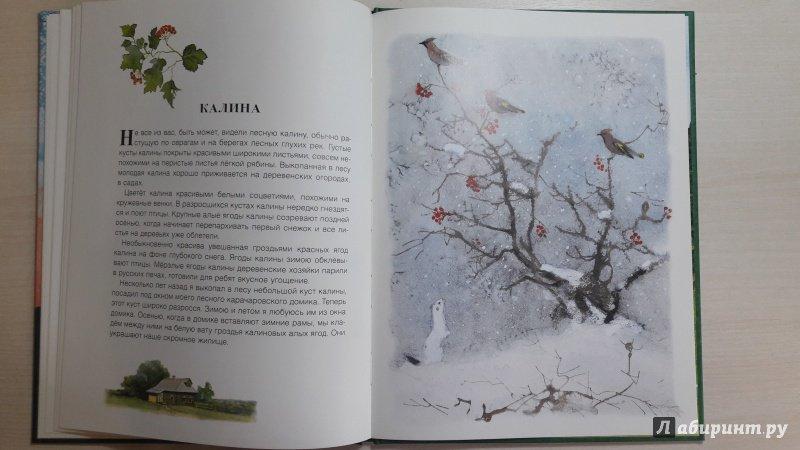 Иллюстрация 56 из 56 для Русский лес - Иван Соколов-Микитов   Лабиринт - книги. Источник: Елена  Е.