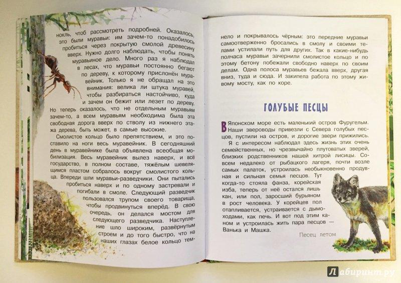 Иллюстрация 18 из 62 для Рассказы о природе - Михаил Пришвин   Лабиринт - книги. Источник: Катерина Громова