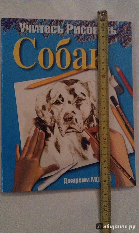 Иллюстрация 7 из 18 для Учитесь рисовать собак - Джереми Морган   Лабиринт - книги. Источник: ss0263042