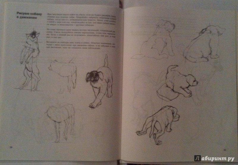 Иллюстрация 18 из 18 для Учитесь рисовать собак - Джереми Морган | Лабиринт - книги. Источник: ss0263042