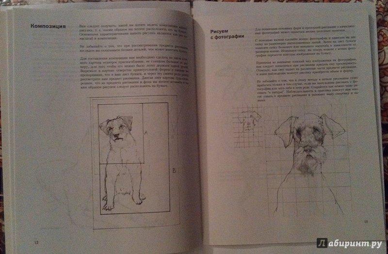Иллюстрация 9 из 18 для Учитесь рисовать собак - Джереми Морган | Лабиринт - книги. Источник: ss0263042