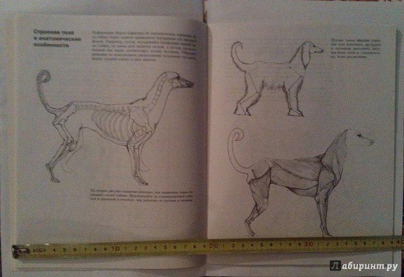 Иллюстрация 11 из 18 для Учитесь рисовать собак - Джереми Морган | Лабиринт - книги. Источник: ss0263042
