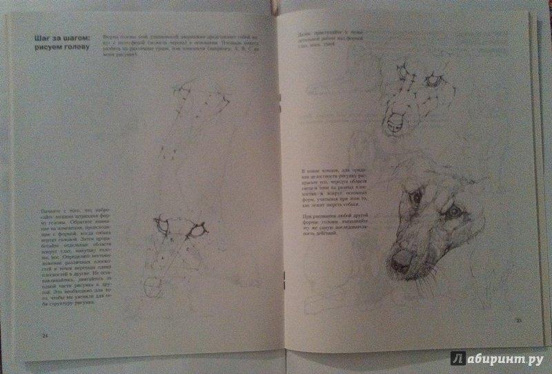 Иллюстрация 16 из 18 для Учитесь рисовать собак - Джереми Морган | Лабиринт - книги. Источник: ss0263042