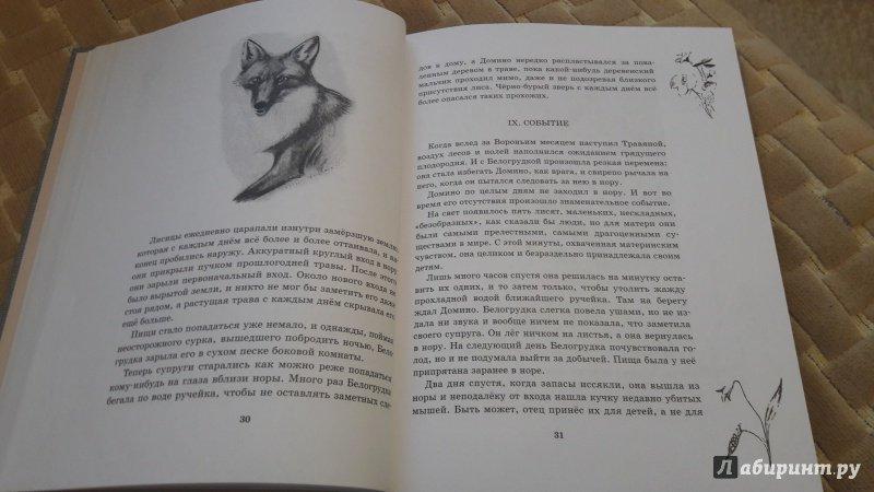 Иллюстрация 56 из 72 для Рассказы о животных. Часть 1 - Эрнест Сетон-Томпсон   Лабиринт - книги. Источник: Лабиринт