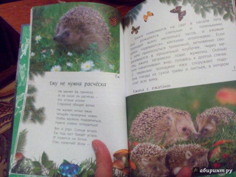 Иллюстрация 2 из 21 для Лесные тайны - Александр Тихонов | Лабиринт - книги. Источник: Oksasha