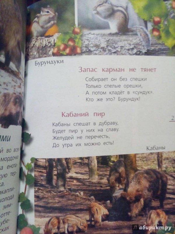 Иллюстрация 3 из 21 для Лесные тайны - Александр Тихонов | Лабиринт - книги. Источник: Oksasha