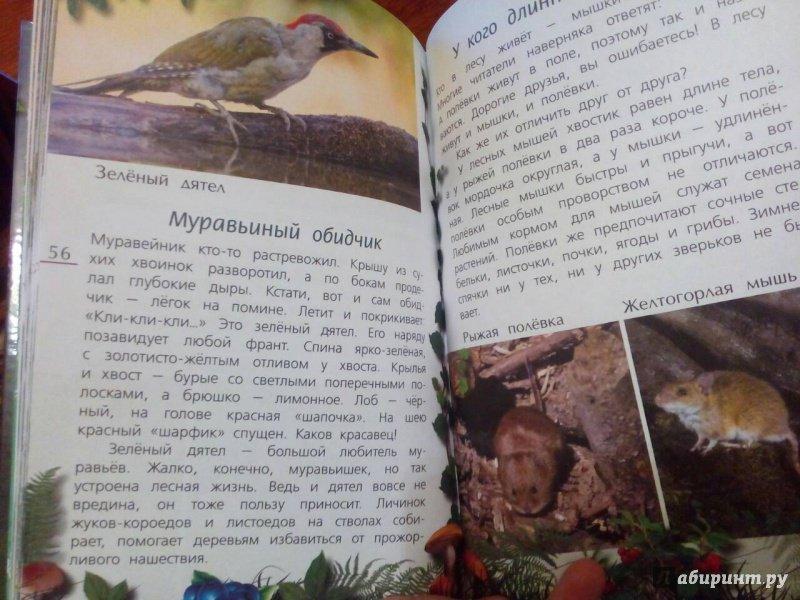 Иллюстрация 6 из 21 для Лесные тайны - Александр Тихонов | Лабиринт - книги. Источник: Oksasha